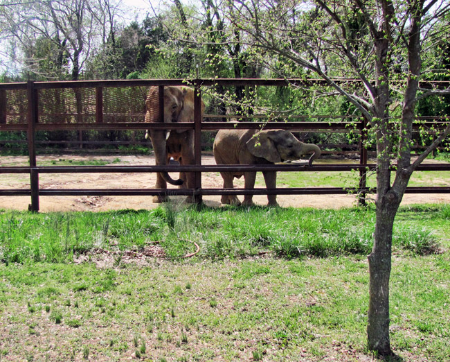 Riddle's Elephant and Wildlife Sanctuary