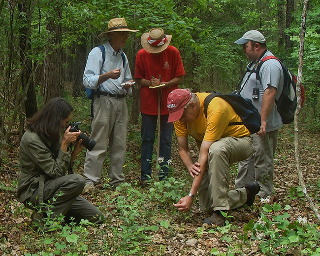 Arkansas Native Plant Society Field Trip--East Cadron Creek