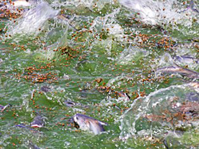 HKDSNARC Fish Feeding