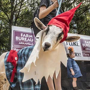 Arkansas Goat Festival