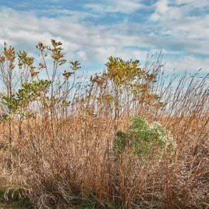 Grand Prairie Grassland