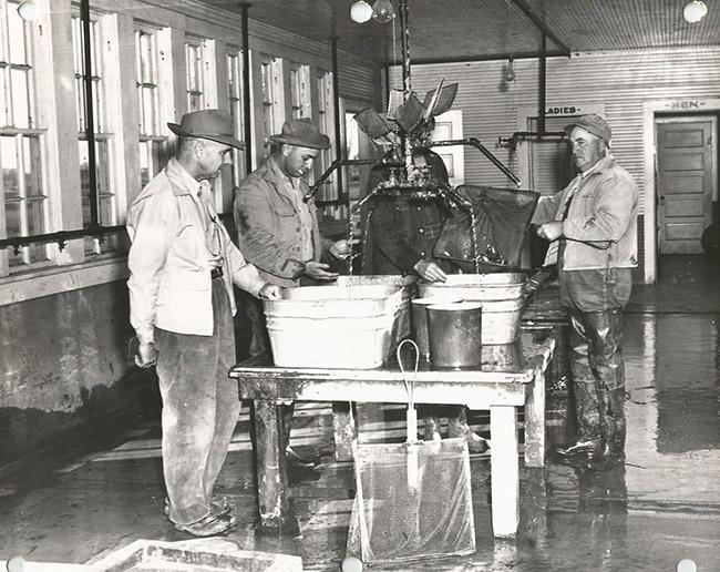 Hatchery Workers