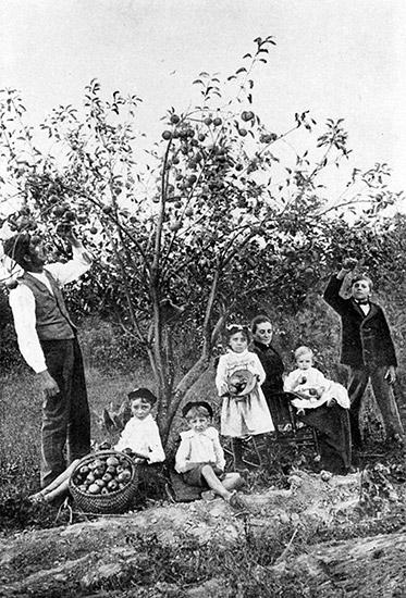 Logan County Apple Orchard, 1920s