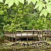 Logoly State Park: Pier