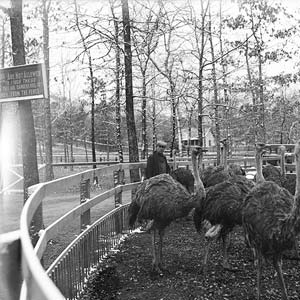 Ostrich Farm in Hot Springs