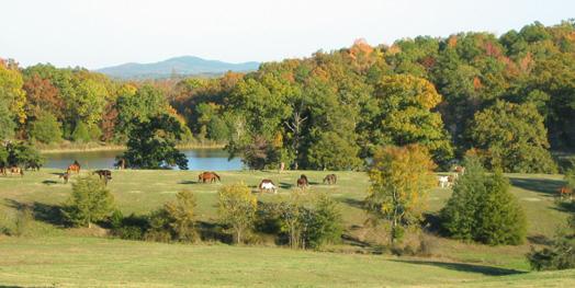 Proud Spirit Horse Sanctuary