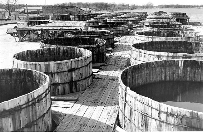 Pickle Barrels; 1955