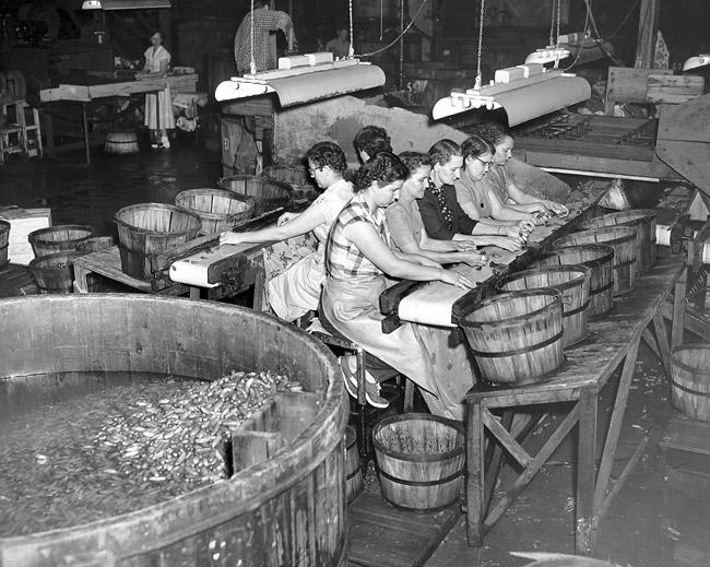 Sorting Pickles; 1955