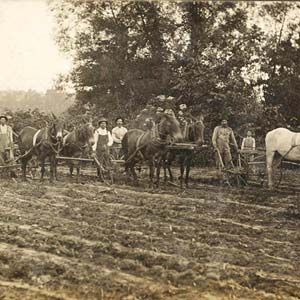 Plainview Farmers
