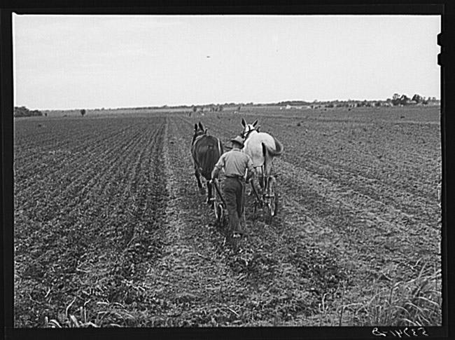 Plum Bayou Project Farmer