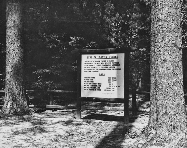 Levi Wilcoxon Forest Entrance