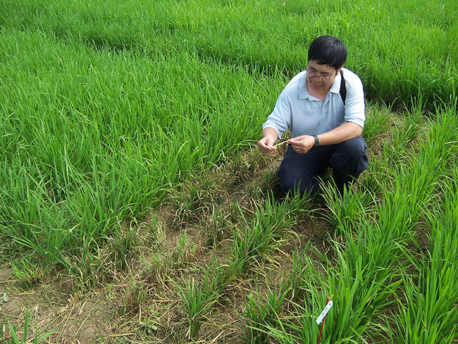 Rice Inspection