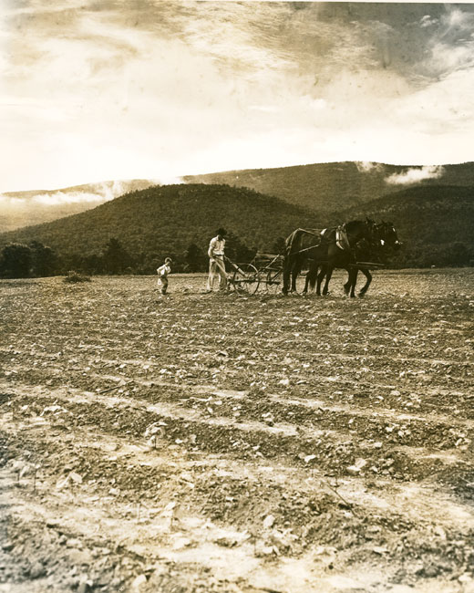 Plowing a Cotton Field