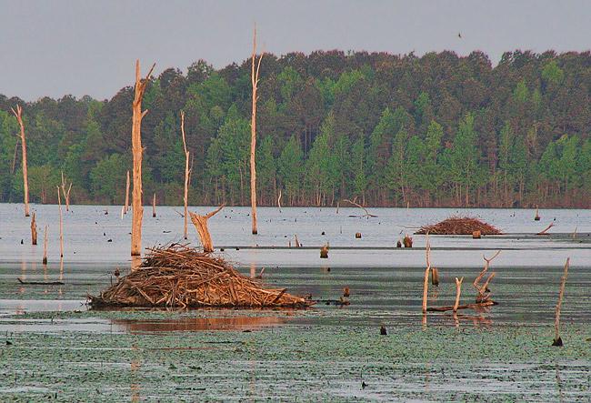 Beaver Lodges at Columbia Lake