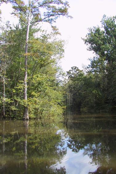 Cache River Natural Area