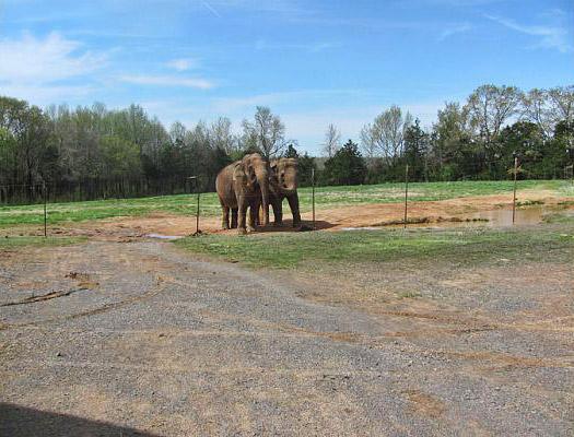 Riddle's Elephant and Wildlife Sanctuary