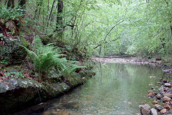 Gap Creek Natural Area