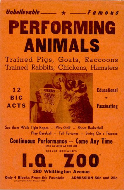 IQ Zoo Handbill