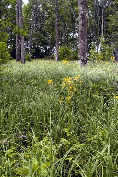 Konecny Grove Natural Area