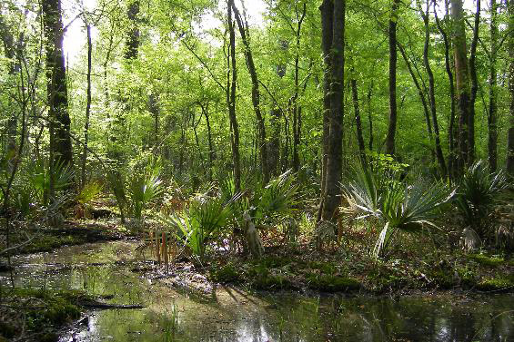 Palmetto Flats Natural Area