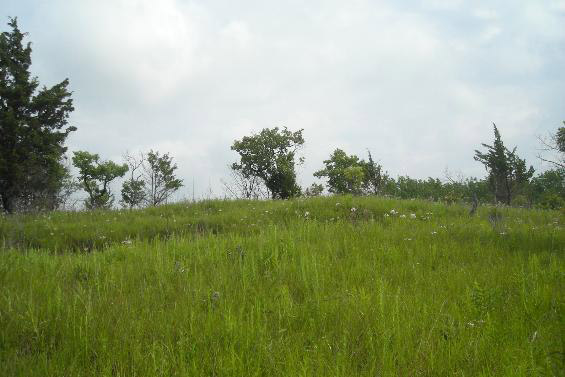Saratoga Blackland Prairie Natural Area
