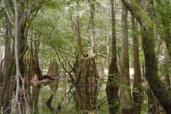 Seven Devils Swamp Natural Area