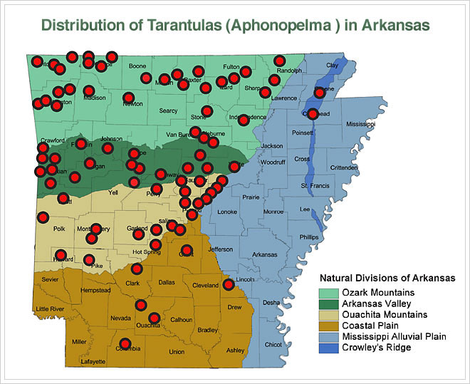 Tarantula Distribution