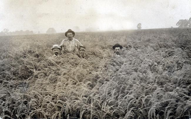 Stuttgart Rice Field