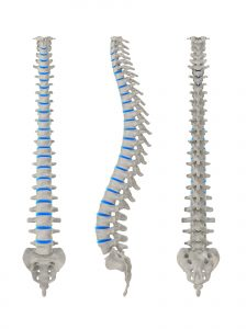 spine from front and side - 3 views