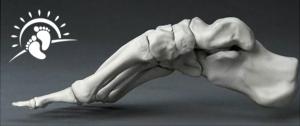 26 bones per foot - side view
