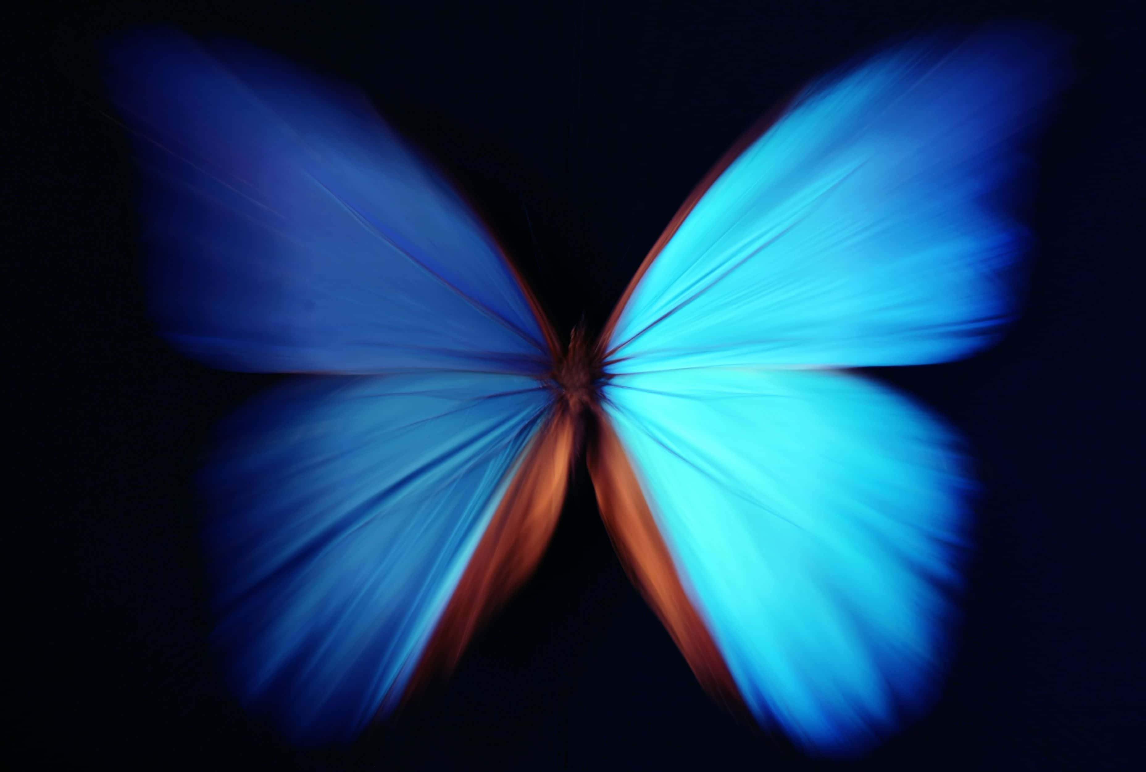 butterfly blue black background