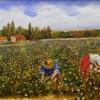 Ramirez_cotton_field_cut_8_x_10_dec_2012