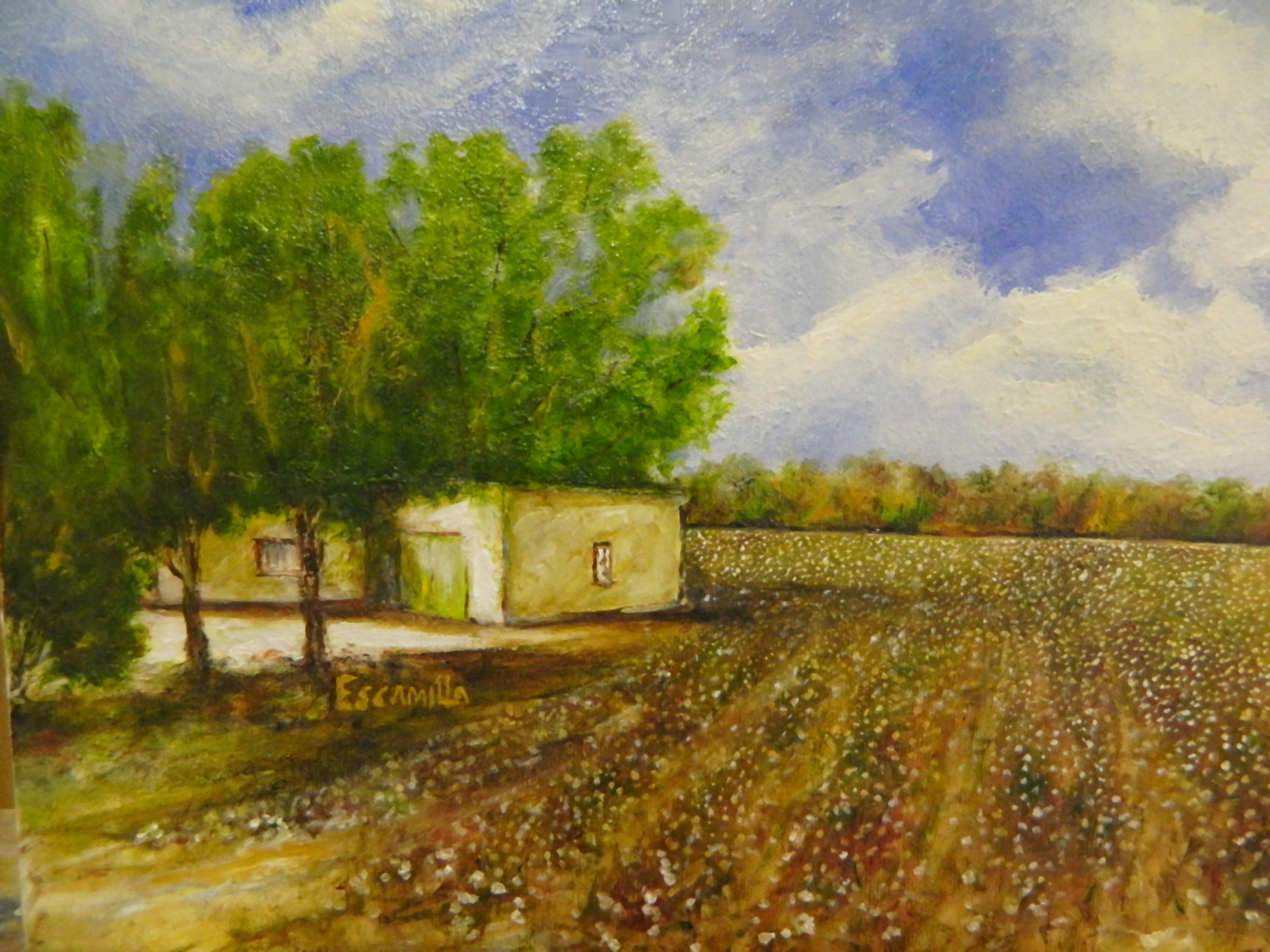 Socorro_cotton_field_2