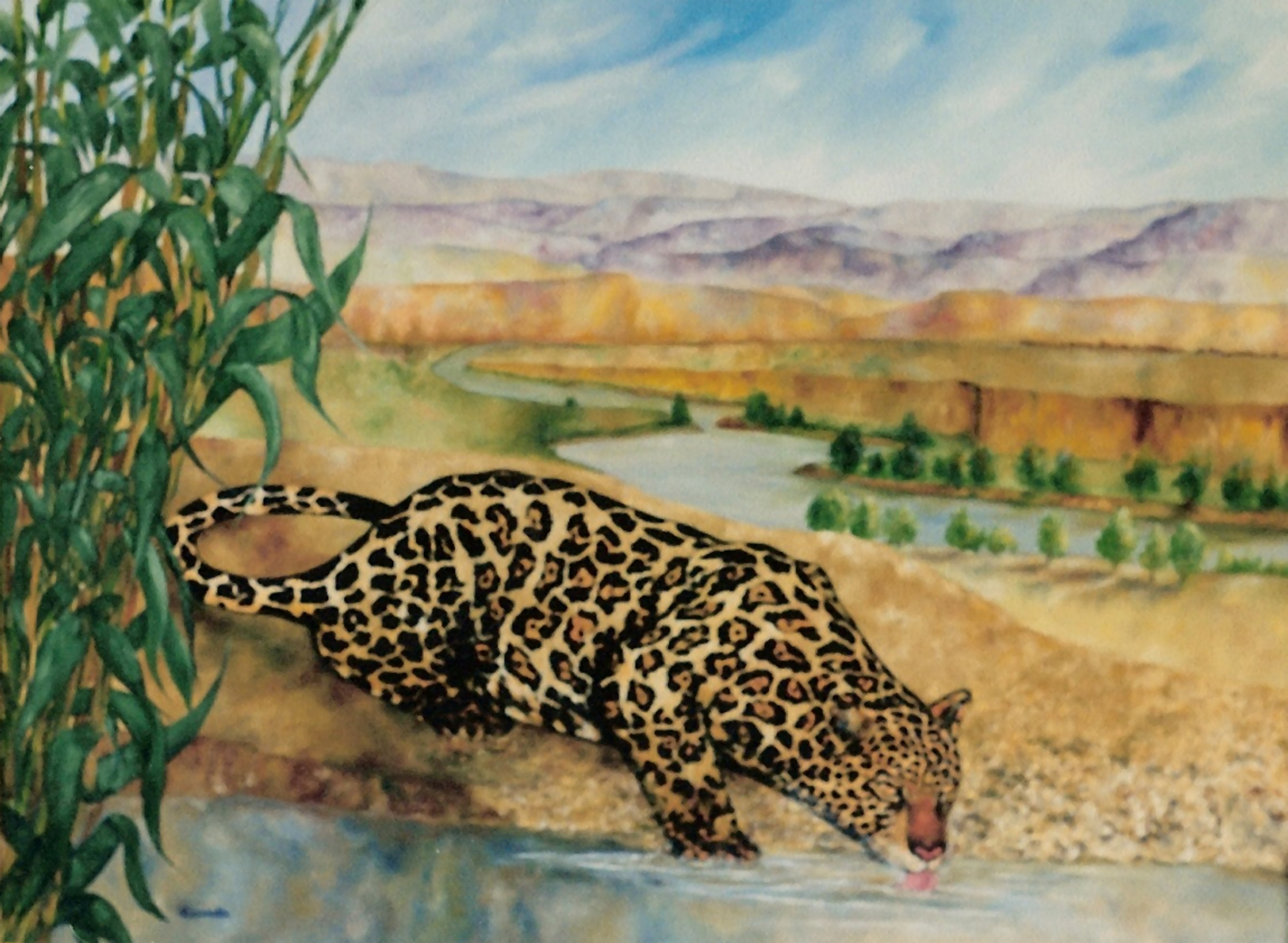 Jaguar_for_cormac