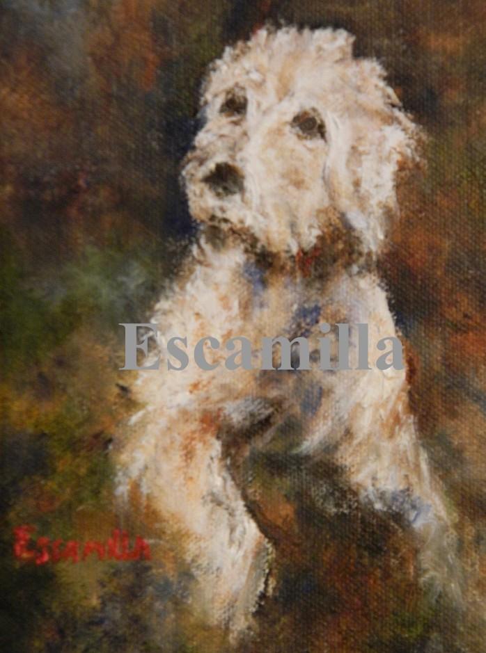 Monet_our_pet_fb