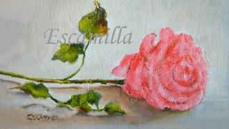 Pink_rose_fb