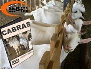 DVD Cabras - Criação e Manejo de R$ 103,00 por apenas R$ 45,00.