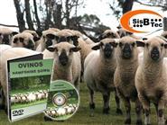 DVD Ovinos Hampshire Down de R$ 103,00 por apenas R$ 45,00.