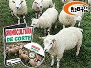 DVD Ovinocultura de Corte - Criação e Manejo de R$ 119,00 por apenas R$ 48,00.