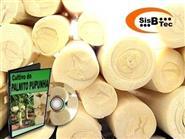 DVD Cultivo do Palmito - Pupunha de R$ 129,90 por apenas R$ 48,00.