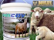 Mineral Vitamínico para Ovinos e Caprinos Phoscav  balde de 5kg + Frete Grátis de R$ 199,00 por apenas R$ 129,00.