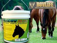 Vitamínico Para Equinos!!! Phoscav Equinos Balde 05 kg + Frete Grátis de R$ 199,00 por apenas R$ 129,00.