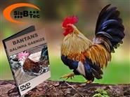 DVD Bantans - Galinhas Garnizé de R$ 119,00 por apenas R$ 29,90.