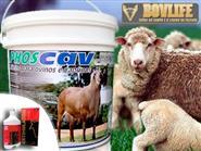 Mineral Vitamínico para Ovinos e Caprinos Phoscav pacote de 1kg + Frete Grátis de R$ 39,90 por apenas R$ 29,90.
