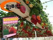 DVD Produção de Morangos em Estufa de R$ 103,00 por apenas R$ 29,90.