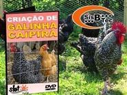DVD Criação de Galinha Caipira de R$ 103,00 por apenas R$ 29,90.