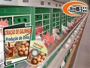 DVD Criação de Galinhas para a Produção de Ovos de R$ 119,00 por apenas R$ 29,90.