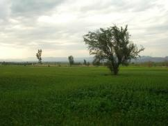 110 Kanal Great Location Agricultural Land For Sale