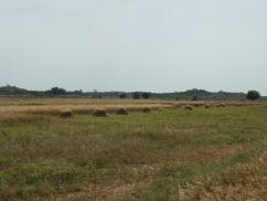 3000 Kanal Agricultural Land For Sale At Rs 250,000 Per Kanal