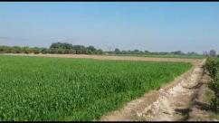 84.5 Kanal Prime Location Agriculture Land For Sale
